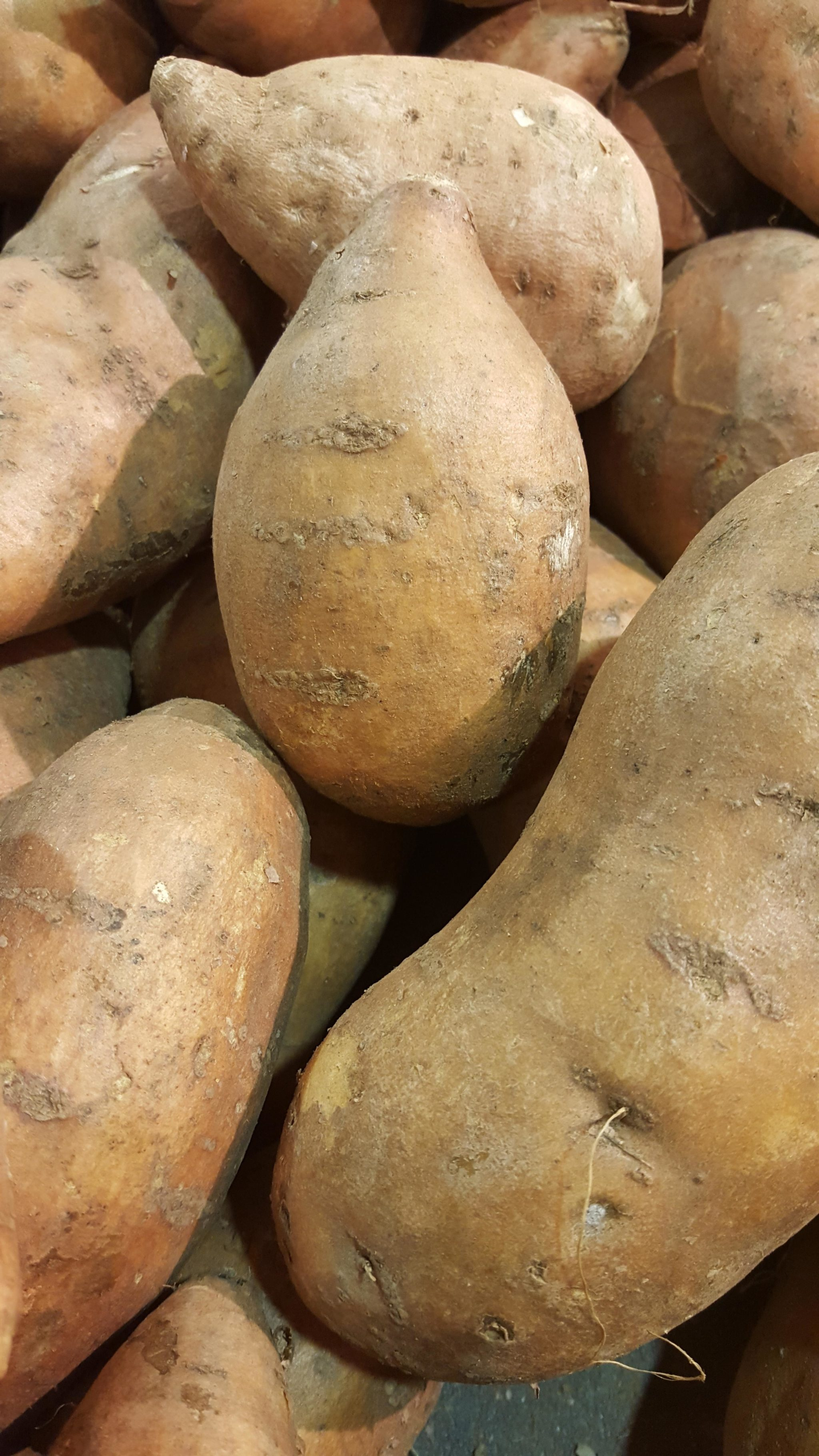 Sweet Potato Harvest Time in Georgia