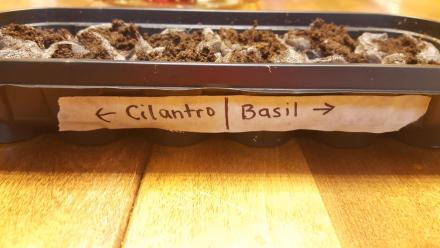Three Tools that Will Improve Your Indoor Seed Starting