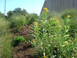 National Pollinator Week 2016