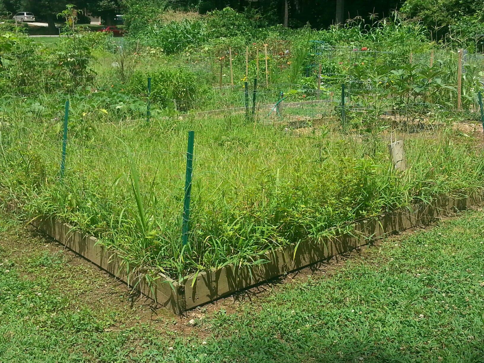 weedy-plot
