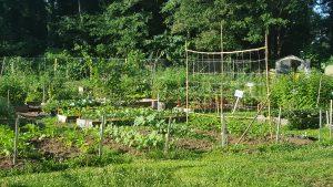 Warm Season Vegetable Planting Chores For Georgia