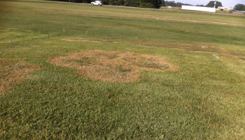 Methods to Maximize Efficacy of Turfgrass Fungicides