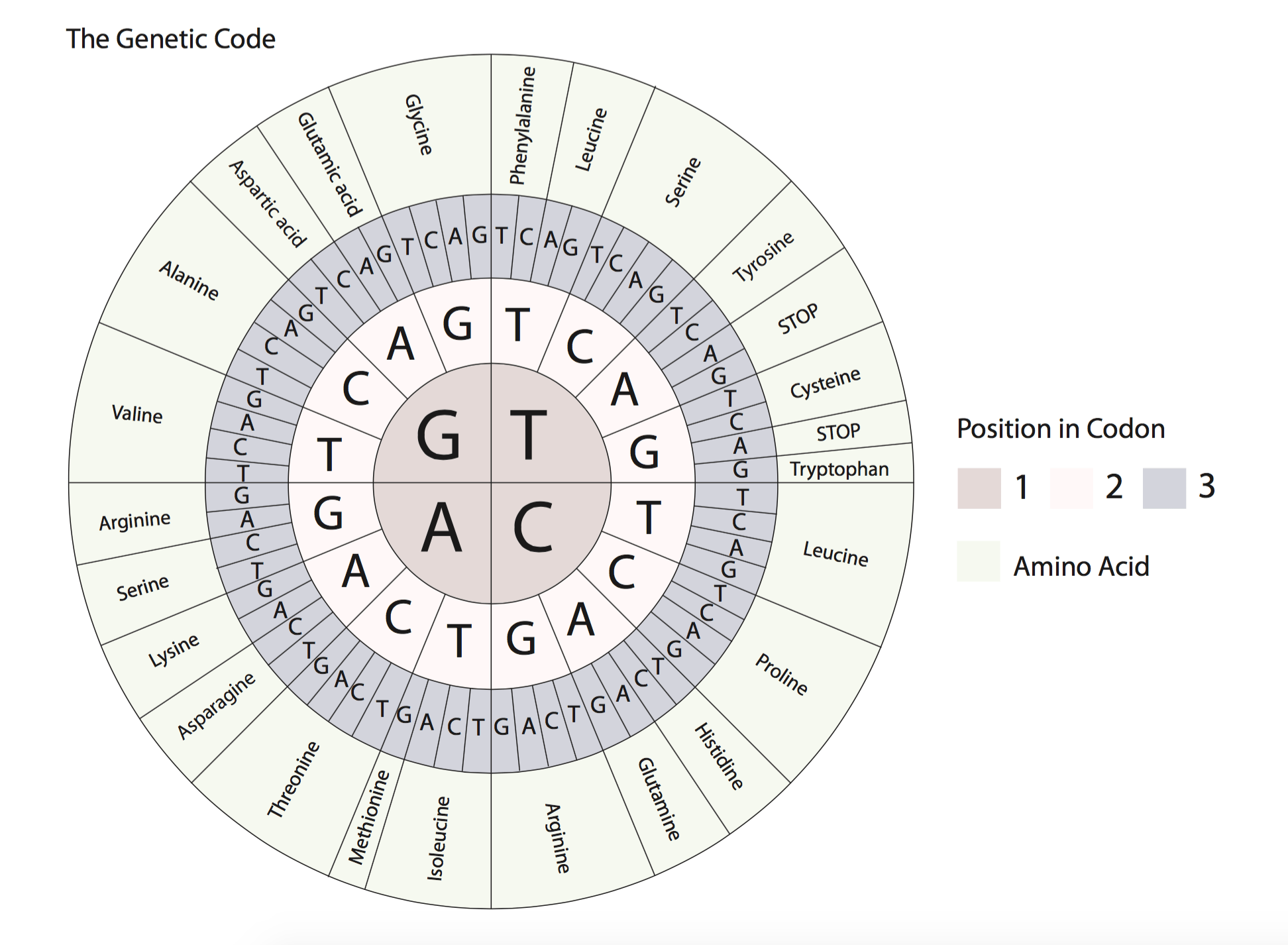 Dna The Code For Life