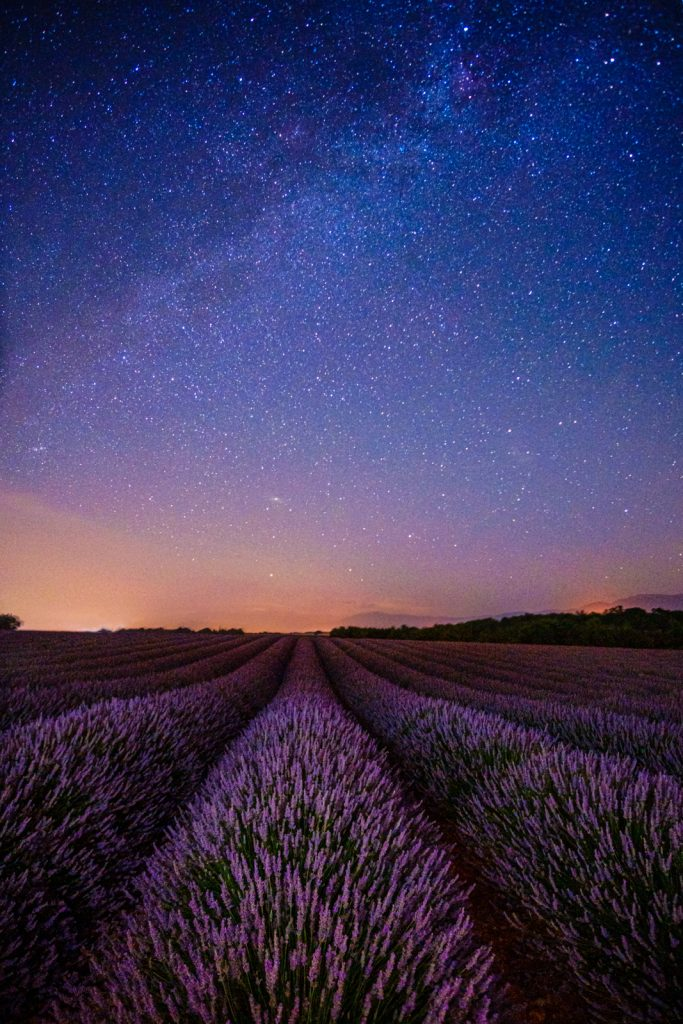 Lavender fields, Valensole Plateau, France