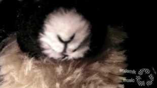 prinzenallee-bleubird-jayrope-the-goat-vs-the-panda-part-i-promo-video