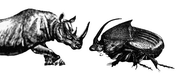 Sole's Black Canyon Music - the rhino beetle can't be crushed