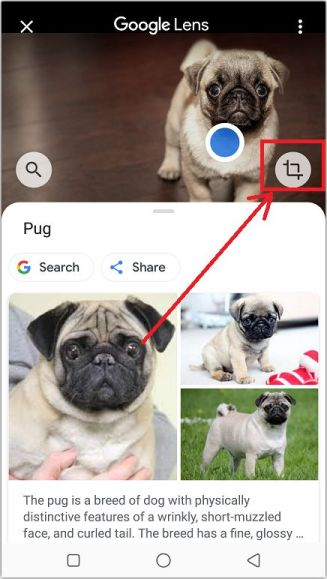 cropping a specific part of the image to use for the search query