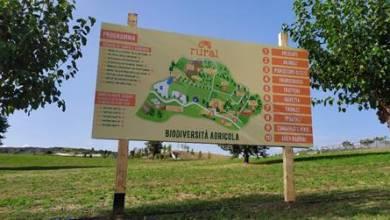 immagine festival biodiversità agricola