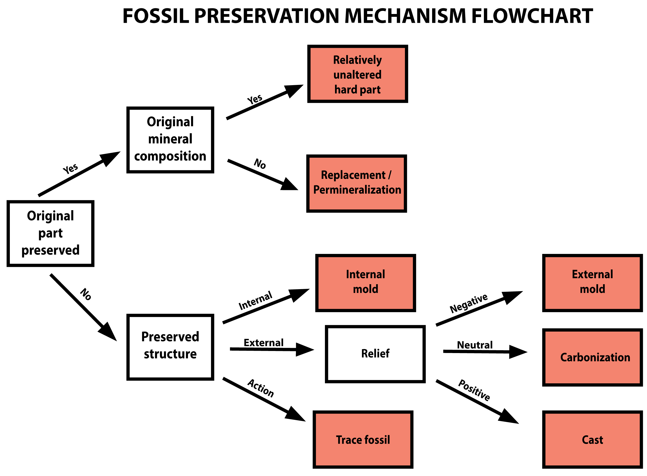Chapter 6 Fossil Preservation The Story Of Earth