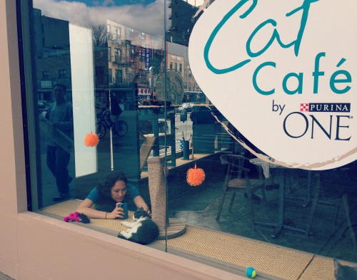 Catfe: the cafe with cats