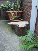 en nog een keer: de boomstronk! (c)uilentaal