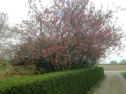 De boom op 6 april