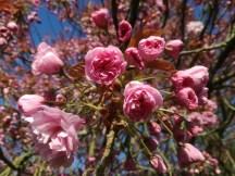 Bloemen op de helft