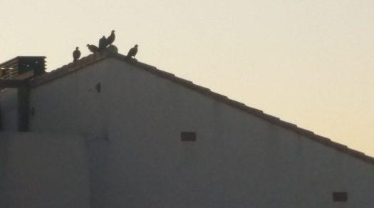 De duif uitjebewust