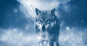 de wolf uitjebewust