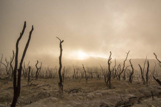 Als we echt iets aan klimaatverandering willen doen uitjebewust