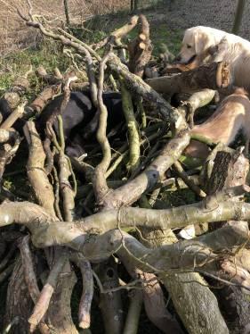sprokkelen in het brokjesbos