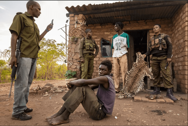 After searching a house and finding a leopard skin, two rangers question a suspected poacher