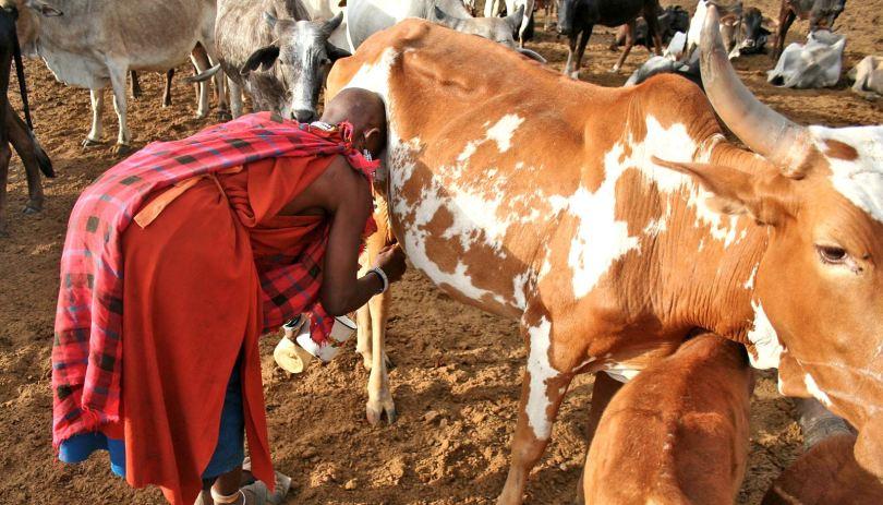 East African herders drank milk 5,000 years ago