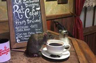 बड़े बड़े चूहों के साथ सर्व की जाती है यहां कॉफी