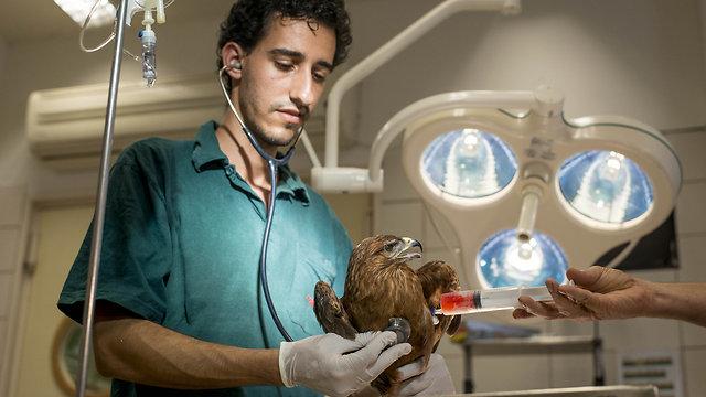 Vérpótlás a kórházban. Fotó: Ynetnews