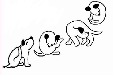Kutya, kiásva