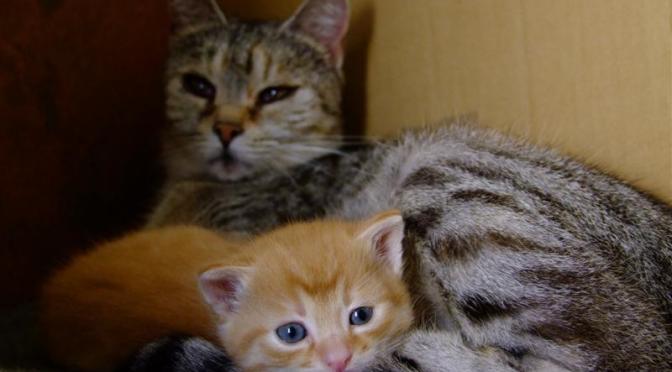 Murakami Haruki: Emberevő macskák
