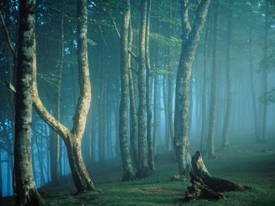 Bohém erdő