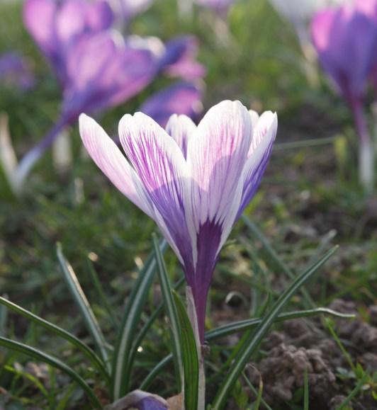 Frühling in MG
