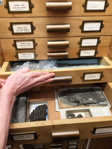 Elizabeth Philpot's fish fossils