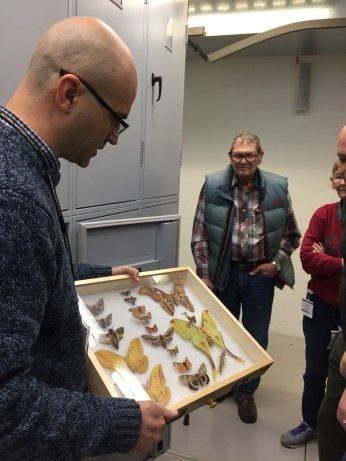 Florin shows us examples from the British butterfly collection