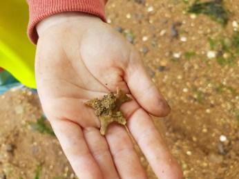 Bryozoan found by Finn Davey