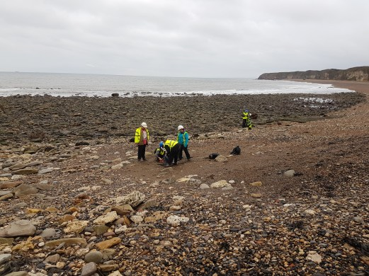 Many fossils were found on the foreshore