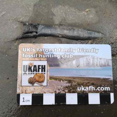 Large belemnite found by Terry