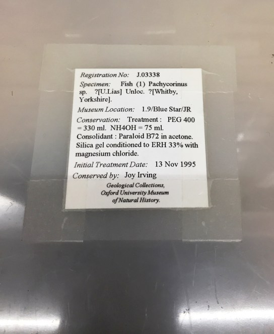 Pyrite rot treatment label