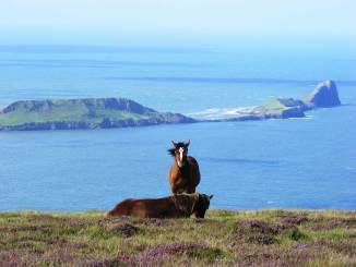 The Gower Aera of Outstanding Natural Beauty (Image: Rodw CC3.0)