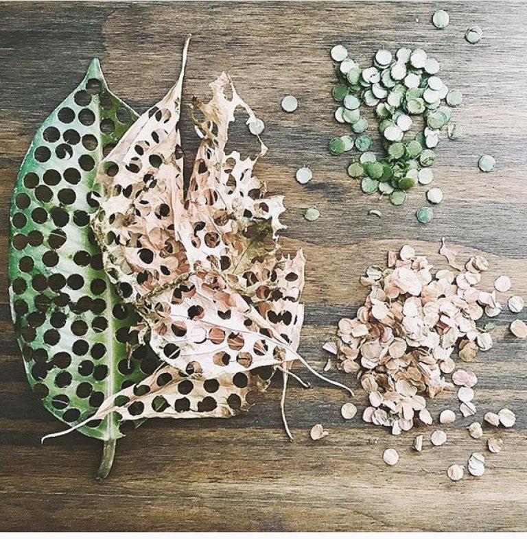 Leaf Confetti.