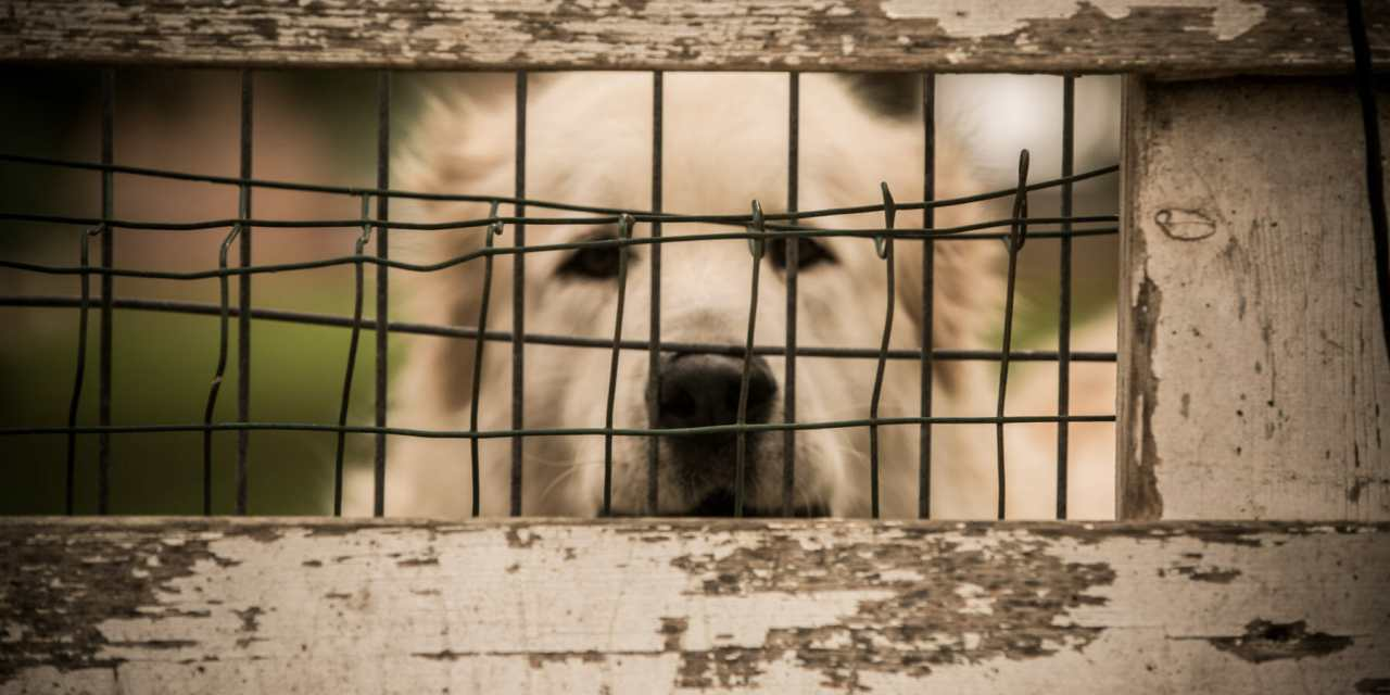Animal Welfare Groups Brace for Rejected Puppies