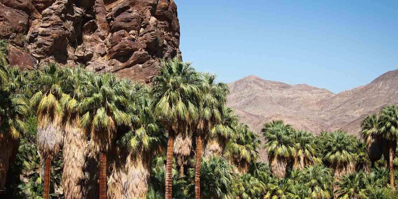 Andreas Canyon Trail in Palm Springs Woos Hikers