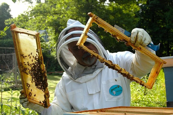 Hadley Date Gardens Cited for Bee Attack