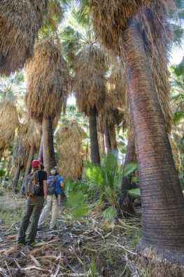 Dos Palmas Preserve Ideal for Holiday Weekend