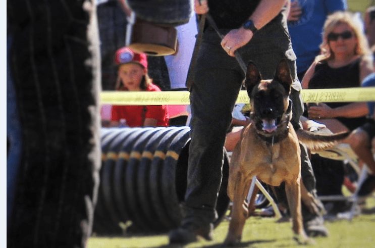 Wyatt, San Jacinto K-9, Remembered as Hero