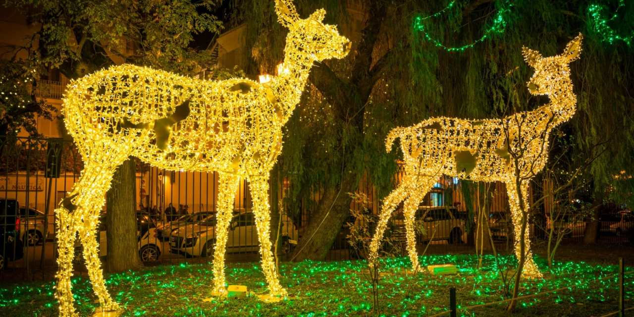 WildLights Celebrates 26 Years with New, Old