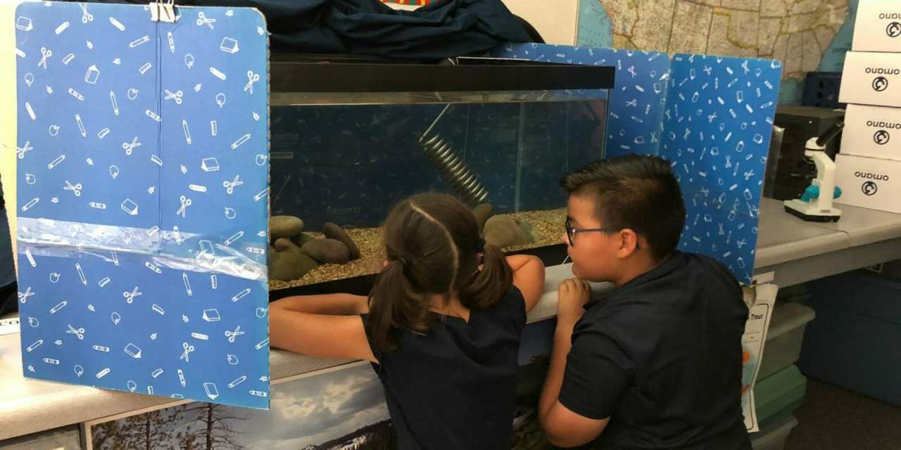 Trout Take Up Residence in DSUSD Classroom