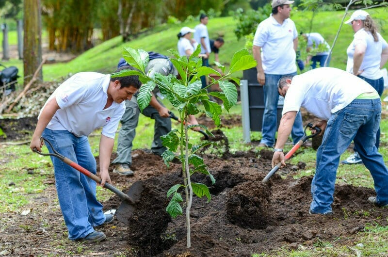 1000 Tree Initiative Considered in Cathedral City