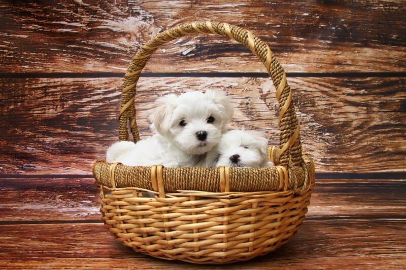 Adopt a Puppy on National Puppy Day