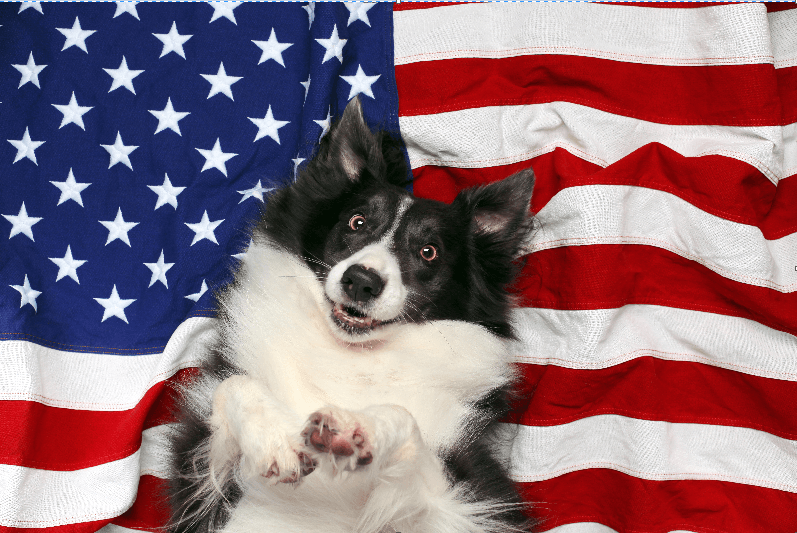 Pets for Vets Up for Supervisors' Discussion