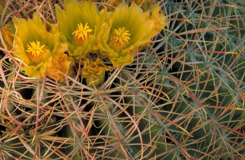 Fern Canyon Trail Features Maidenhair Ferns