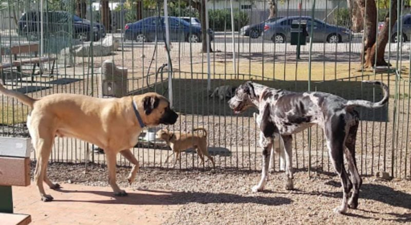 Palm Springs Dog Park Re-opens May 23rd