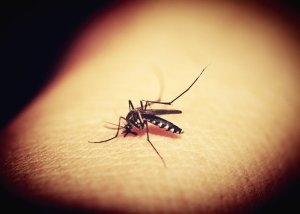 Mosquitoes Positive for St. Louis Encephalitis